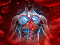 Нужно ли тренировать сердце и как его укрепить
