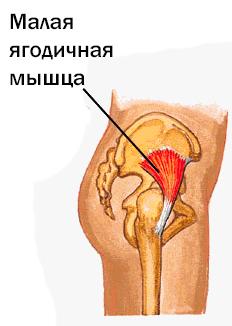 Малая ягодичная мышца