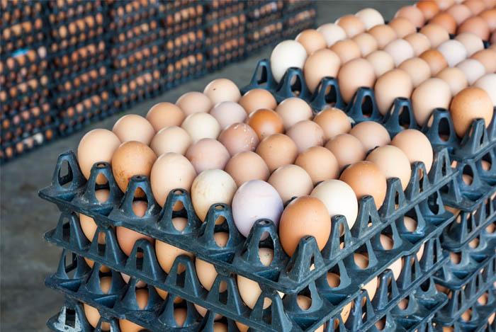 Куриные яйца в лотках