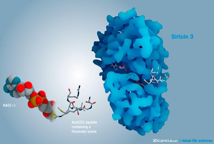 Синтез пептидных свзяей