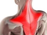 Сильные трапеции – здоровые плечи
