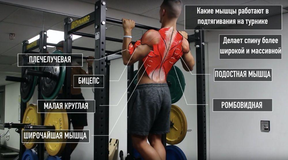 Рабочие мышцы в подтягиваниях
